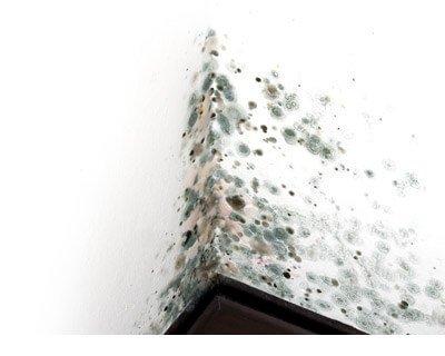 Cavity Wall Extraction